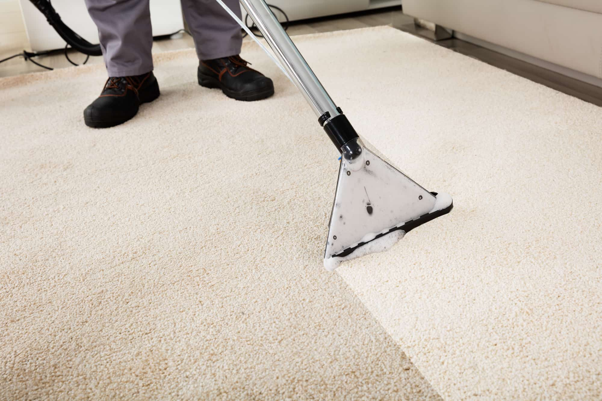 local carpet cleaning company